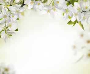 Spring cherry blossom backgrounds