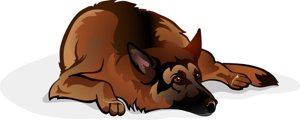 sheepdog lying