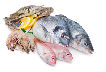 Fresh catch of fish and other seafood isolated on white