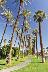 Palm trees line a walking path with sky