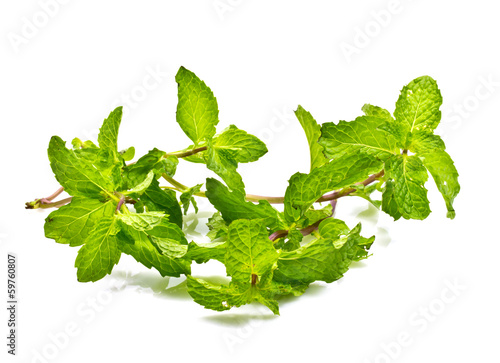 Fresh mint close up on white background