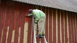 painter on ladder to the house wall paint wall with thick brush