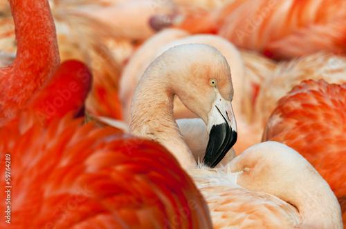 Fotobehang Flamingo Flamingo