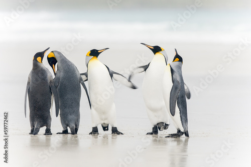 In de dag Pinguin King Penguin