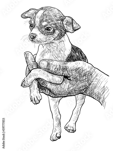 Chihuahua in palm