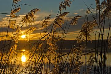 Schilf am See in der Abenddämmerung