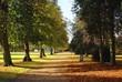 avenue. pathway. fall season. autumn