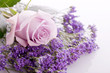 beautiful lavander and pink rose on .bright background - 59790075