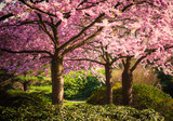 Colors of spring - 59790036