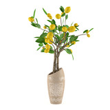 Citrus lime tree in the vase at the white background
