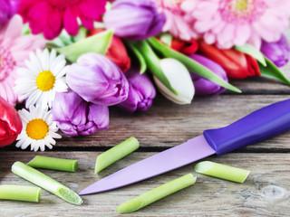 Blumen - Pflege