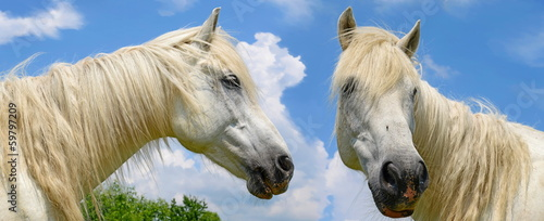 Heads of horses against the sky