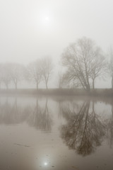 Reflected trees on a misty morning