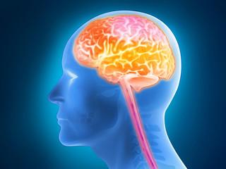 Menschliche Anatomie - Gehirn, Gehirnaktivität