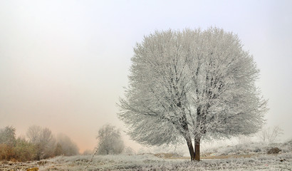 winter landscape of frozen trees