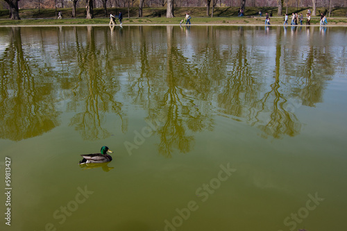 Pato en el Lincoln Memorial Reflecting Pool