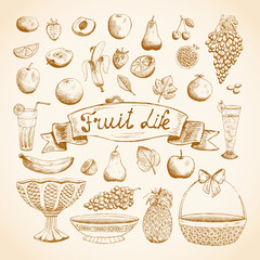 Sketches of juicy fresh fruits