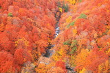 Autumn colours of Jougakura valley, Aomori, Japan