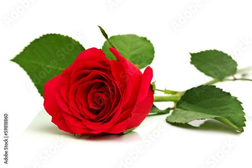 Fotobehang Rozen Red rose on white