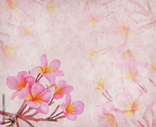 frangipani or plumeria tropical flower with old grunge antique p