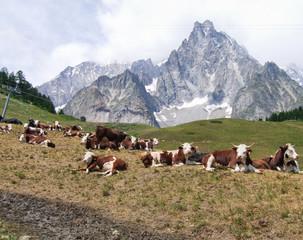 alpeggio in Val d'Aosta