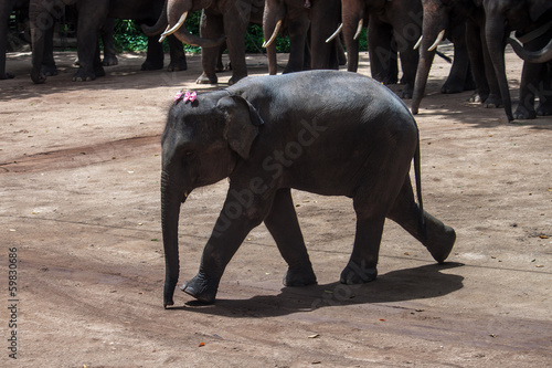 Baby elephant at The Thai Elephant Conservation Center