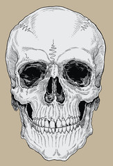 Realistic Cross Hatched Inked Human Skull