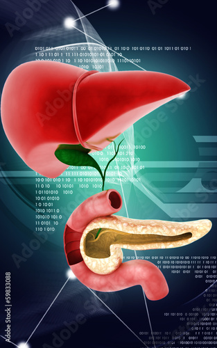 Pancreas and Liver