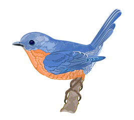 Little bird orange blue