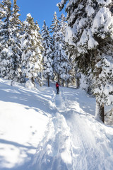 escursione nel bosco con ciaspole