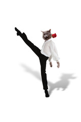 Cat dances  tango with a red  flower on  white background