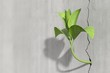 Leinwanddruck Bild - Little 3d plant growing on a concrete wall