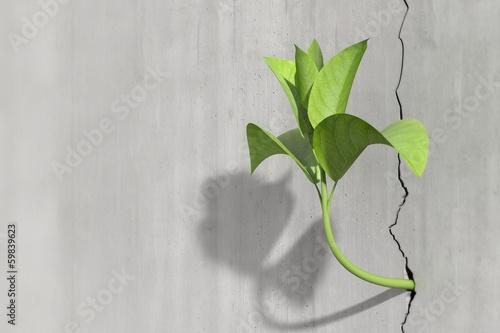 Leinwanddruck Bild Little 3d plant growing on a concrete wall