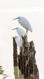 egret group