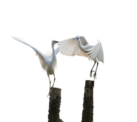 isolated egrets