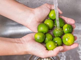 Washing Calamondin Fruit