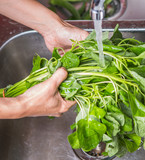 Washing Spinach Vegetables