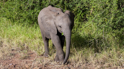 Baby Elephant Alone Close Up
