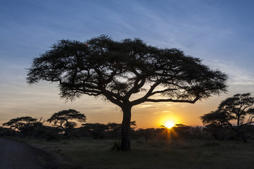 African Sunset Behind The Trees