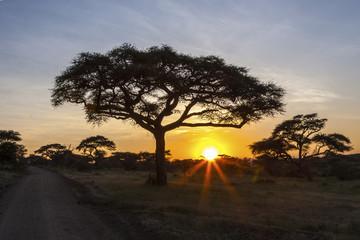 Majestic Sunset In Serengeti National Park