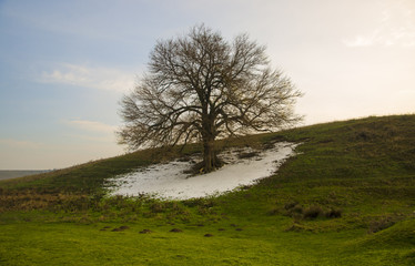 Lonely tree with snow at spring