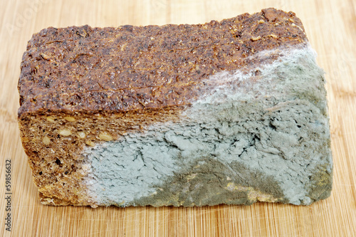 Wholemeal bread moldy