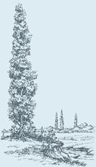 Vector drawing. Summer poplar on the hill