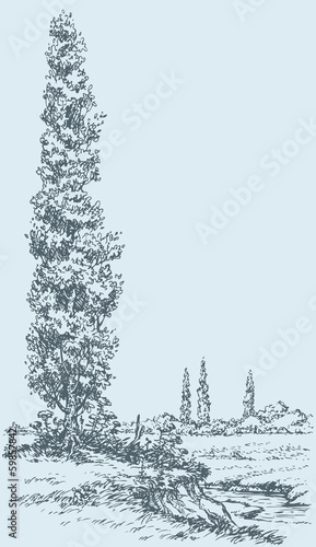 Vector drawing. Summer poplar on the hill