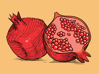 hand drawing pomegranate