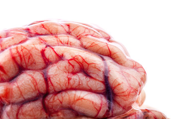 The sheep's brain on white background