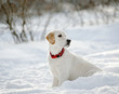 retriever puppy in snow