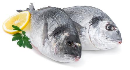 Fresh Fish, Spartus aurata