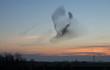 Starlings at Dusk - 59877016