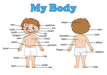 vocabulary part of body